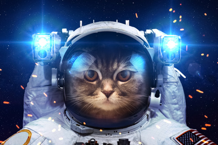 Photo pour Beautiful cat in outer space.  - image libre de droit