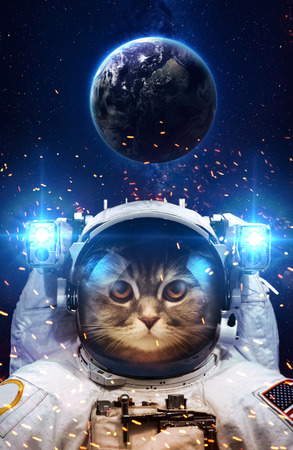 Beautiful cat in outer space. の写真素材