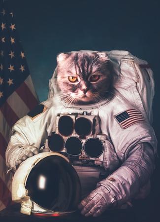 Foto de Beautiful cat astronaut.   - Imagen libre de derechos