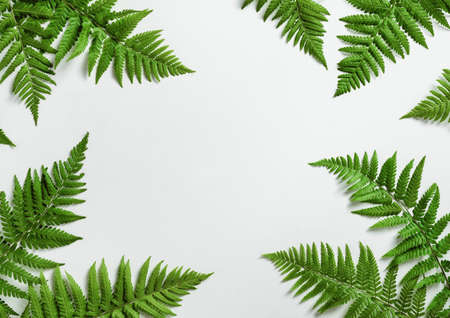 Fern botanical background, view from above, flat layの写真素材