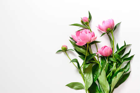 Pink peonies branch on white, flat lay, blank space for a text