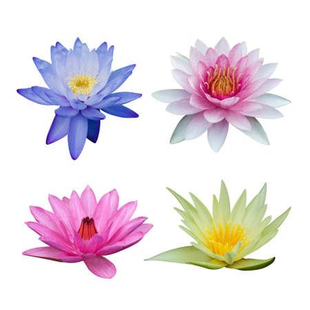 Photo pour Water lily set isolated on white - image libre de droit