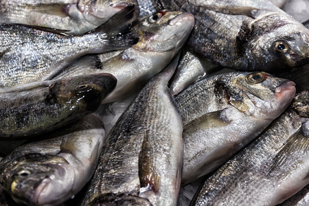 dorado fish sea food on ice