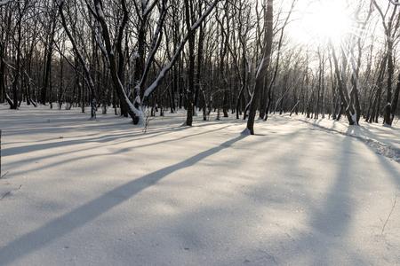 Forest russian winter sunlight landscape nature