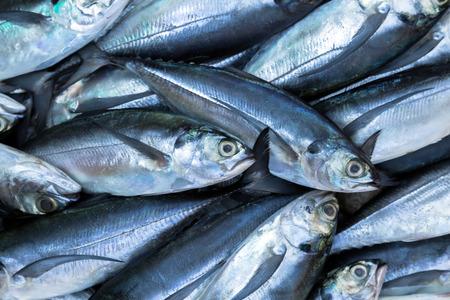 Foto de fish on ice exposition sea market. Seafood on ice - Imagen libre de derechos