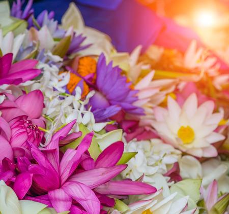 Photo pour Blooming Violet water lily lotus flowers - image libre de droit