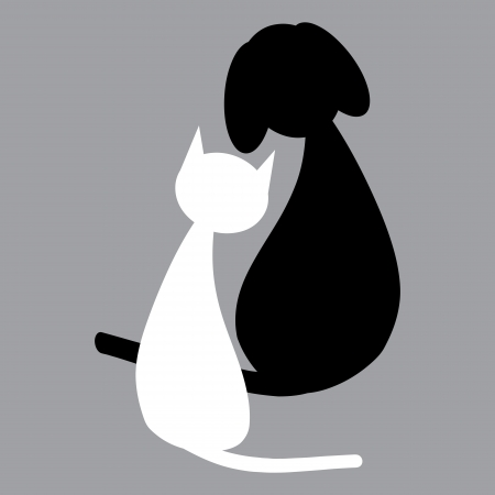 White cat and black dog