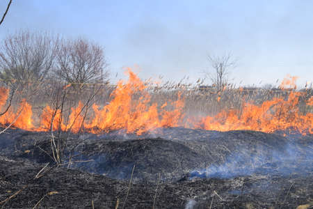 Fire on a plot of dry grass, burning of dry grass and reeds, flames and ash.