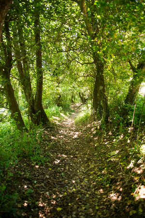 Path in the woods during the summer season