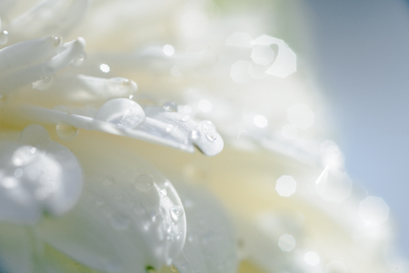 details and macro shots of a bouquet of flowers. The freshness of water droplets and white flowers in the sunlight giving a summery feel