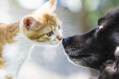 Foto de Friendship of a red kitten and a dog - Imagen libre de derechos