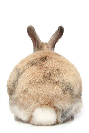 Rabbit on a white background  rear view