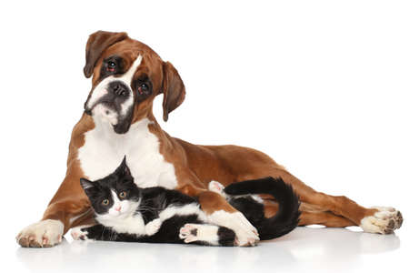 Photo for Cat and dog together lying on the floor - Royalty Free Image