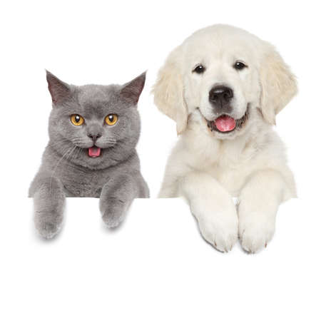 Foto de Cat and dog over white banner. Animal themes - Imagen libre de derechos