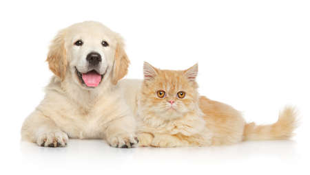 Photo for Cat and dog together lying on a white background. Animal themes - Royalty Free Image