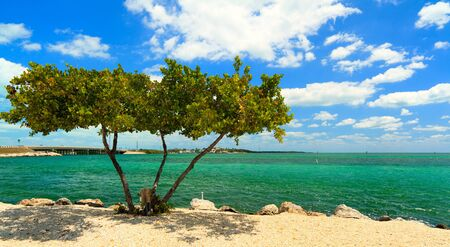 Shoreline of the Florida Keys with pretty blue sky and clouds