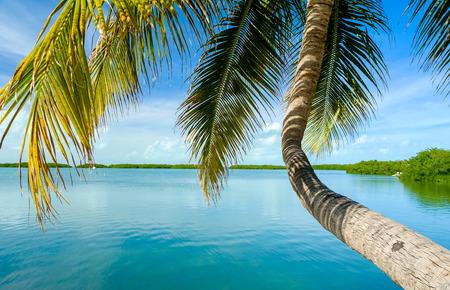 Photo pour Beautiful Florida Keys along the shoreline coconut palm tree and gulf view. - image libre de droit