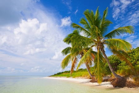 Summer at a tropical paradise in Florida Keys USA with palm trees blue sky clouds and cry