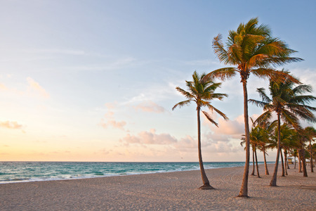 Miami Beach, Florida colorful summer sunrise or sunset with palm trees, beautiful sky and ocean