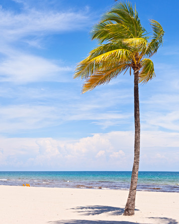 Foto de Palm trees on a beautiful sunny summer afternoon in Miami Beach Florida with ocean and blue sky in the background - Imagen libre de derechos