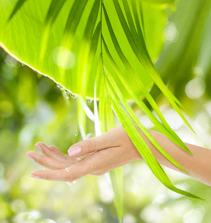 Beautiful Female Hands on the green background of a tropical forest's leaves with drops