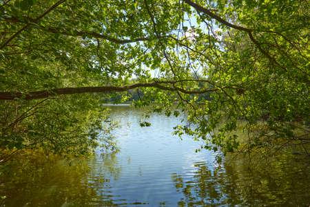 Foto de Tree on the shore of a sunlit lake. - Imagen libre de derechos