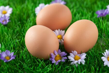 Three chicken eggs lying in a (fake) field with grass and flowers