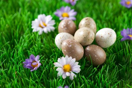 Small easter eggs on a green meadow with flowers