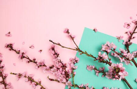 Photo pour Peach blossom on pastel colour background. Fruit flowers. - Image - image libre de droit
