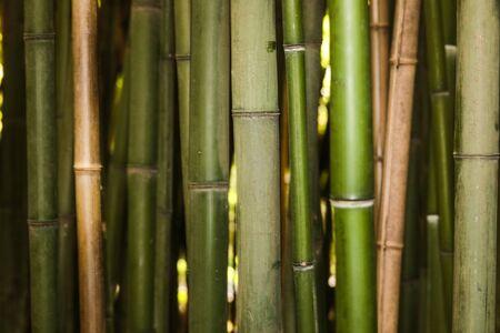 Photo pour bamboo grove nature background - Image - image libre de droit