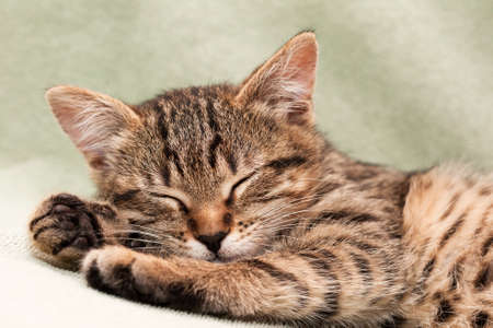 Tabby cat lying on bed