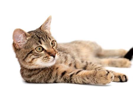 Photo pour Tabby cat lying on white background - image libre de droit