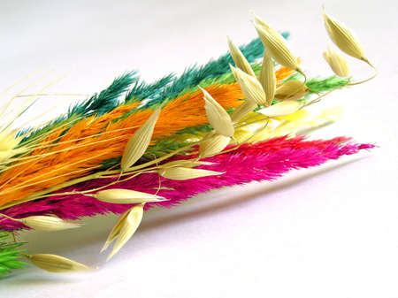 The colourful grasses