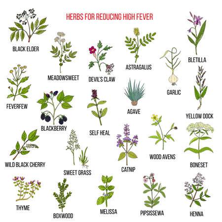 Illustration pour Best herbal remedies for reducing high fever - image libre de droit