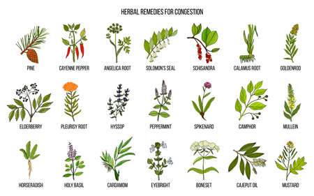Ilustración de Collection of natural herbs for congestion - Imagen libre de derechos