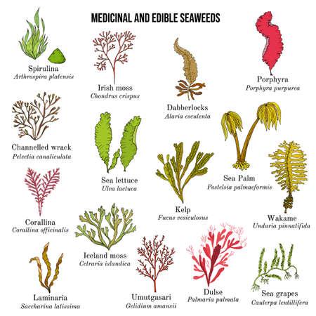 Illustration pour Big collection of edible and medicinal seaweeds - image libre de droit