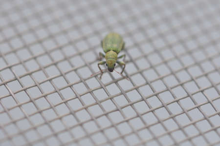 Insect on Screen