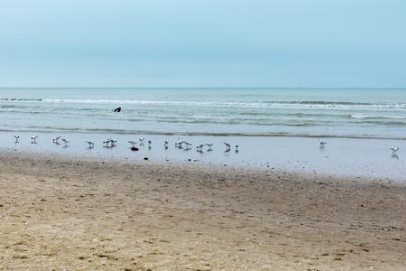 Rimini beach in winter