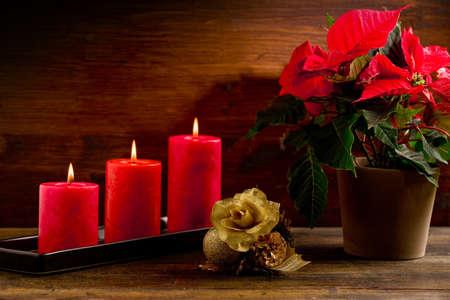 photo of beautiful poinsettia plan on wooden table illuminated by spot