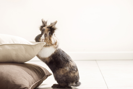 Photo of rabbit leaning against the pillows on the floor