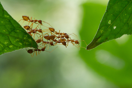 Photo for Ant action standing.Ant bridge unity team - Royalty Free Image