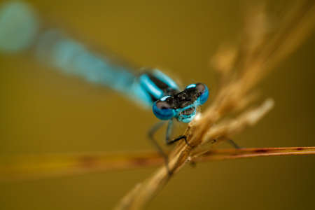 The eyes of this blue damselfly really pop thanks to the creative shallow depth of field
