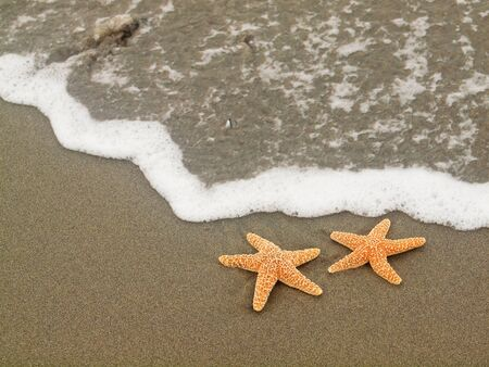 Two Starfish on the Shoreline with Waves