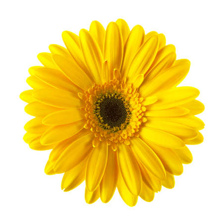 Photo for Yellow daisy flower isolated on white background - Royalty Free Image