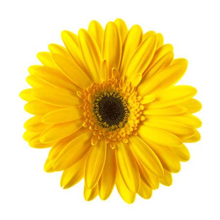 Foto de Yellow daisy flower isolated on white background - Imagen libre de derechos