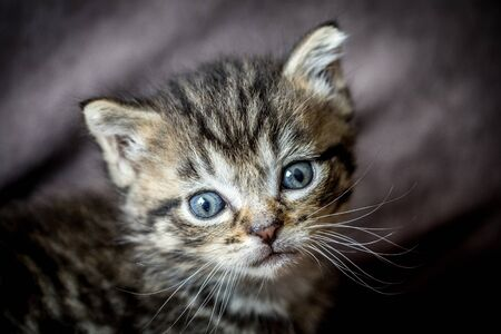 Photo pour portrait of a tabby kitten - image libre de droit