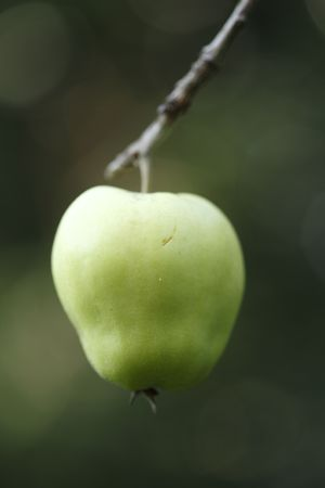 Apple and branch