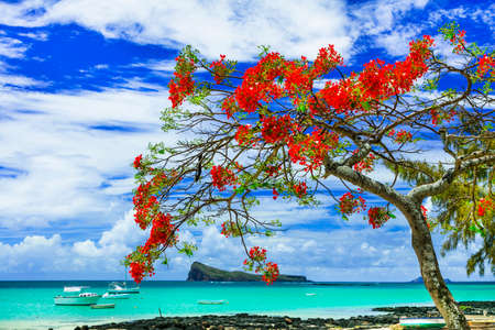 Foto de Tropical paradise in Mauritius island, view with turquoise sea and red flamboyant tree. - Imagen libre de derechos