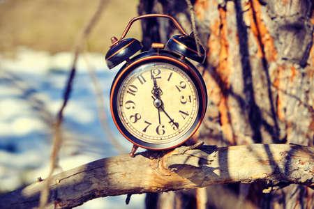 Foto de Old retro alarm clock in the forest on a branch on a bright, warm spring day - Imagen libre de derechos