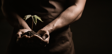 Hands holdings a little green plant, studio shoot